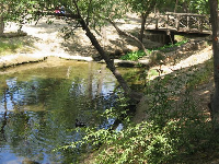 The creek, with ducks and bridge.
