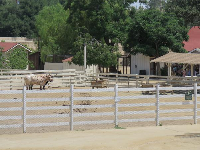 Kids check out the cows at Leonis Adobe on a school excursion.