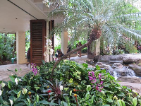 Tropical plants along the walkways.