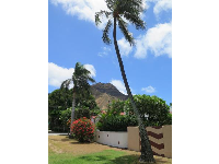 The curves of the palm trees are so whimsical in Hawaii- neighborhood near Kapiolani Park.