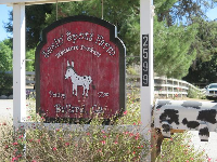 Sign on the road, and cow mailbox.