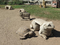 Frog and tortoise statues.