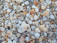 Shells galore!