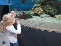 Little girl checks out a shark.