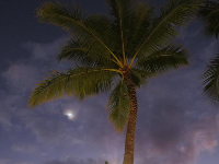 Coconut tree and moon behind a cloud.