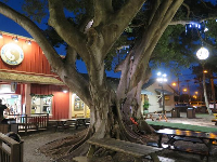 Magical night atmosphere at Haleiwa Store Lots, by Matsumoto Shave Ice.