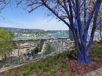 Blue tree and view of blue Walnut Street bridge outside the museum.