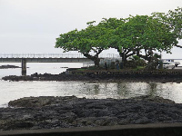 Pretty trees at the start of the bridge that leads to Coconut Island.