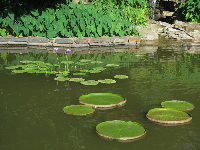 Adorable water lilies.