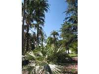 Pines, palms- so tall you wouldn't believe it- every wonderful type of tree you could imagine you can find at Kidsworld!