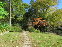 Pathway to more fall colors, plus healthy banana trees even in the cold!
