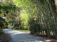 Bamboo forest and path.