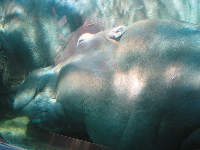 A HUGE hippo snuggles up to her lifelong mate.