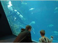 Brothers checking out the shark tank.