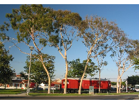 The red train museum in Seal Beach! Notice the pretty eucalyptus trees.