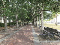 Row of trees for shade at Waterfront Park.