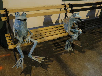 Adorable frogs outside Native Threads, at night.