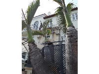 Fat palms and Versace mansion, on Ocean Drive.