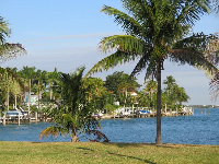 Palms and waterfront houses.