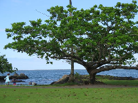 Tree, grass, and ocean.