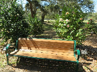 Camellias by a bench.