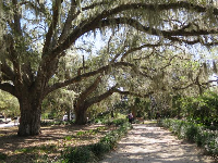 Spanish moss over the entrance path.