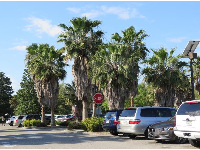 California palms in the parking lot!