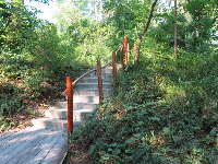 Stairway in the native plants area.