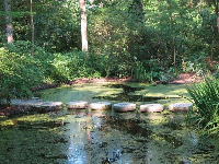 Stepping stones in the native plants area.
