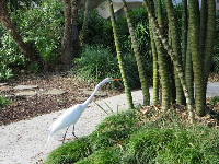 Snowy egret near the bamboo.