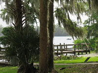 Green grass, water, and Spanish moss.