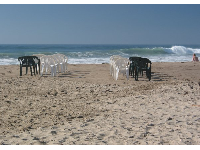 Chairs set up for a wedding at Jalama Beach.