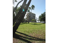 The huge lawn and zillions of coconut trees next to Hau Tree Beach.