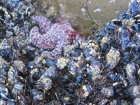 It's fun to explore the tidepools at low tide.