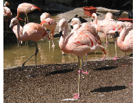 Beautiful flamingoes.
