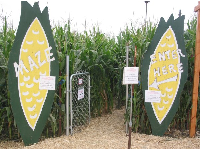 The corn maze!