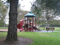 A play structure, bench, and redwood tree.