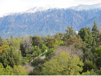 Snow-topped San Gabriel mountains and the tree tops of Pasadena.