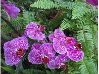 Orchids inside the rainforest area of the Conservatory.