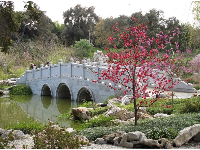 Bridge and blossoms.