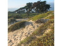 The dunes, with the lagoon behind.