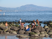 Kids explore the tide pools on a happy Saturday.