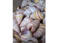 Gorgeous stripey shells- isn't nature the greatest designer?