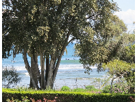 View of surfers from Adamson House gardens.