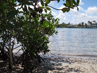 The mangroves provide shade.