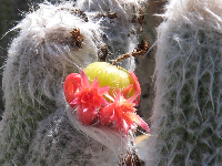 The cactus flowers have such beautiful colors!