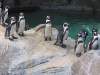 "Penguins looking around: ""Why are they looking at us?"""