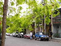 Street with brightest green trees.