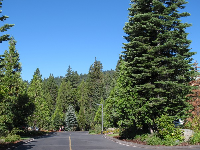 Driveway that leads to the lodge.