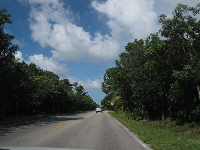 Lush vegetation on Sanibel-Captiva Rd.